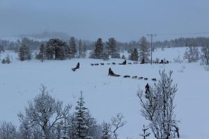 Snowfall & Sledding