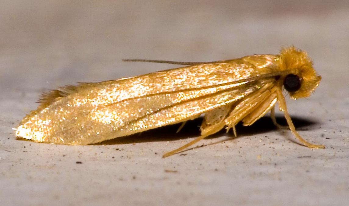 Moth Invasion A Newbie In Norway
