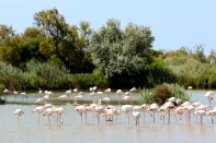The Camargue is a vast wetlands situated in the South of France, where the Rhône River empties into the Mediterranean.