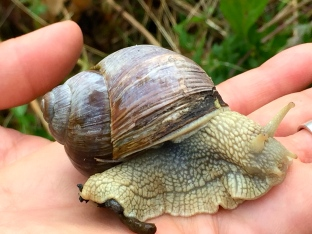 I found a beautiful snail gliding its way along the grass. I had to talk Matthew out of making escargot for dinner.
