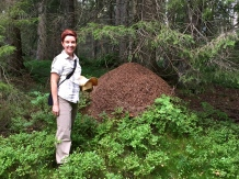 This wood-ant nest is almost as tall as I am.