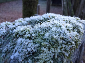 Frost on a hunk of moss.