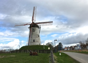 Just the brown cap of the Schellemolen (Schelle Windmill, 1867) turns to face the wind.