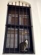 Self-imposed kitty incarceration.
