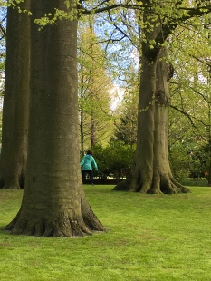 A special shade-tolerant but quick-growing grass gets planted beneath the trees each year. I think these elephant-legged tree trunks belong to beeches. As you can clearly tell from my photos, it's virtually impossible to take a pic without catching at least one of the garden's 800,000 visitors in it.