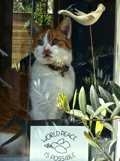 "One of the ""little guesthouse"" windows held this mustachioed kitty, who apparently has great hopes."