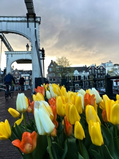 "Pictured is the ""Skinny Bridge"" that crosses the Amstel River. Built in 1672, it's a double Dutch drawbridge that can be drawn up when larger boats pass beneath. It's meant only for pedestrians and bikes, because of its narrow width."