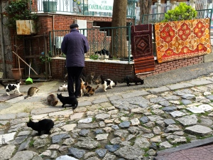 Our hotel manager pointed out this retired policeman, who feeds the local kitties every day and takes all newcomers to be spayed and neutered, which he pays for out-of-pocket.