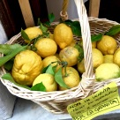 """Grapefruit-sized lemons caution that they're not for sale, as they'll soon become granita -- a slushier form of what we call """"Italian ice"""" back in the States."""