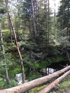 Bogs along Ullevålseter trail