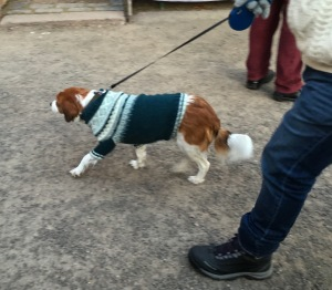 You know it's Christmas when the dogs strut their Norwegian holiday sweaters on the street.
