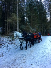 When the snow is deep enough, diners can travel from the Grüner Baum Hotel via horse-drawn sleigh rather than wagon.