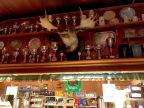 A moose stands guard over more trophies.