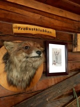 "I'm thinking this foxy guy partook a little too enthusiastically of the eggs in the hen house and thus officially joined the memorial wall for the breakfast club (""frokostklubben"")."