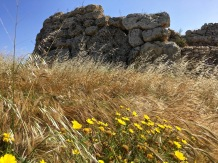 The Ġgantija Temples lie in a fertile plain that tells the story of how their builders lived. These folks were farmers and herdsmen (notice all the grains); not just hunters and gatherers. They grew several kinds of cereals, which gave some fiber (and some carbs) to their Stone Age menu. So much for the supposed Paleo diet plan....