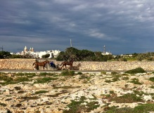 Harness racing is big on Malta. During our hike, we watched trainers from a nearby stable exercising their horses. On another day, we passed by a bay and saw a trainer standing out in the ocean as two trotters on lead harnesses swam in a circle around him.