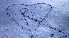 Herder Aslak Ante tossed out lichen behind his snowmobile as he traced the pattern of a heart pierced by the letter R in the snow. And the hungry reindeer came a runnin'....