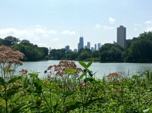 https://www.chicagobirder.org/events/2018/10/24/north-pond-bird-walk