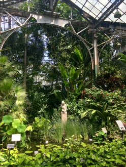 The LP Conservatory's Palm House holds several species of palms as well as fruiting trees like cacao, coffee, papaya, and more. The lily pool here is a reminder of the days when Chicago's famed lily ponds supplied rare seeds to places as far away as Egypt.