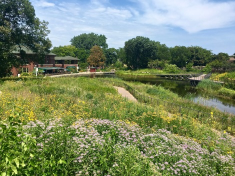 At the south end of the zoo, you'll find South Pond, which features a Nature Boardwalk that introduces you to prairie and marsh plants, as well as migrational bird species and other local animals that can be found here year-round. The islands in the center host a rookery for the rare and endangered Black-crowned Night Heron, which you'll see congregating in enormous nests built in the treetops. On the left of this photo is the gorgeous Cafe Brauer, where you can grab some food and take in the vista.