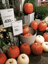 "Later, more varieties of pumpkin came on the scene and were usually offered by florist shops rather than grocery stores. I guess pumpkin pie and other pumpkin dishes aren't big here, although last year the Coop near us began offering Libby canned pumpkin around Thanksgiving time. Again, ""for you Americans."""